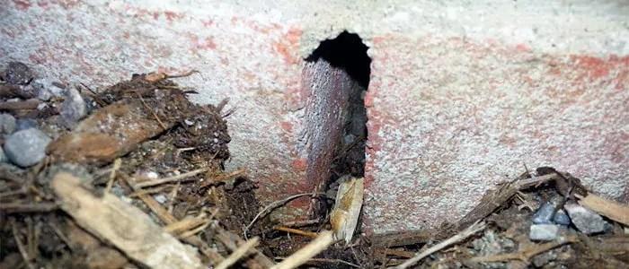 Small mice hole