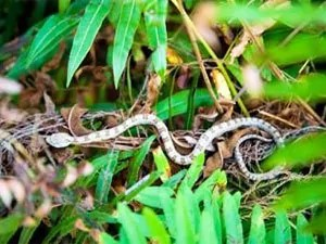 Try professionals for getting rid of snakes