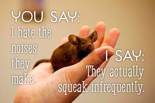 Mice squeak infrequently
