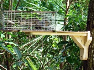 Squirrel's live traps