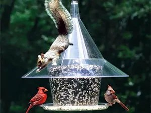 Squirrels' trap