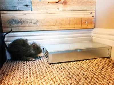 Victor tin cat mice trap