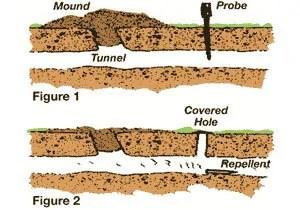 Mole's tunnels