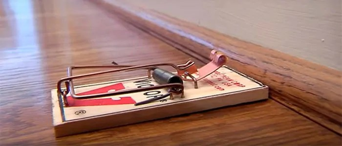 Mousetrap by Victor