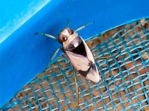 Water bugs habitats