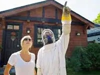 How to get rid of yellow jackets
