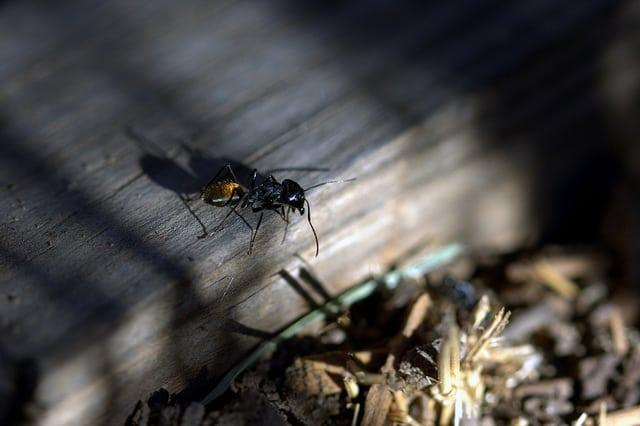 Why Do Some Ants Have Wings And Others Don T