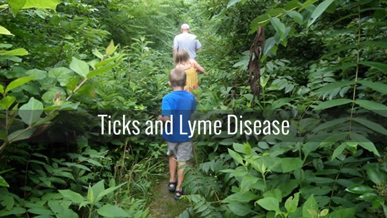 ticks-and-lyme-disease-7
