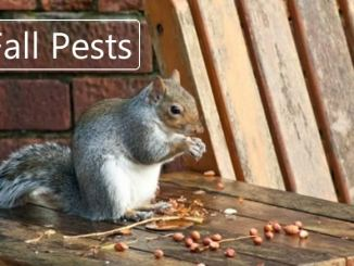 Fall Pests