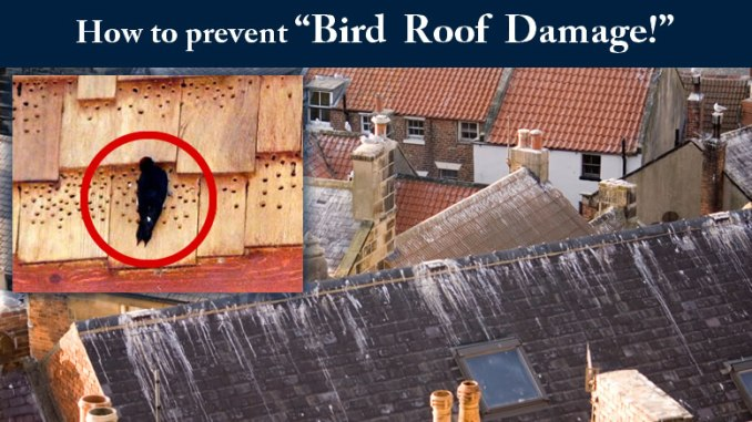 bird roof damage