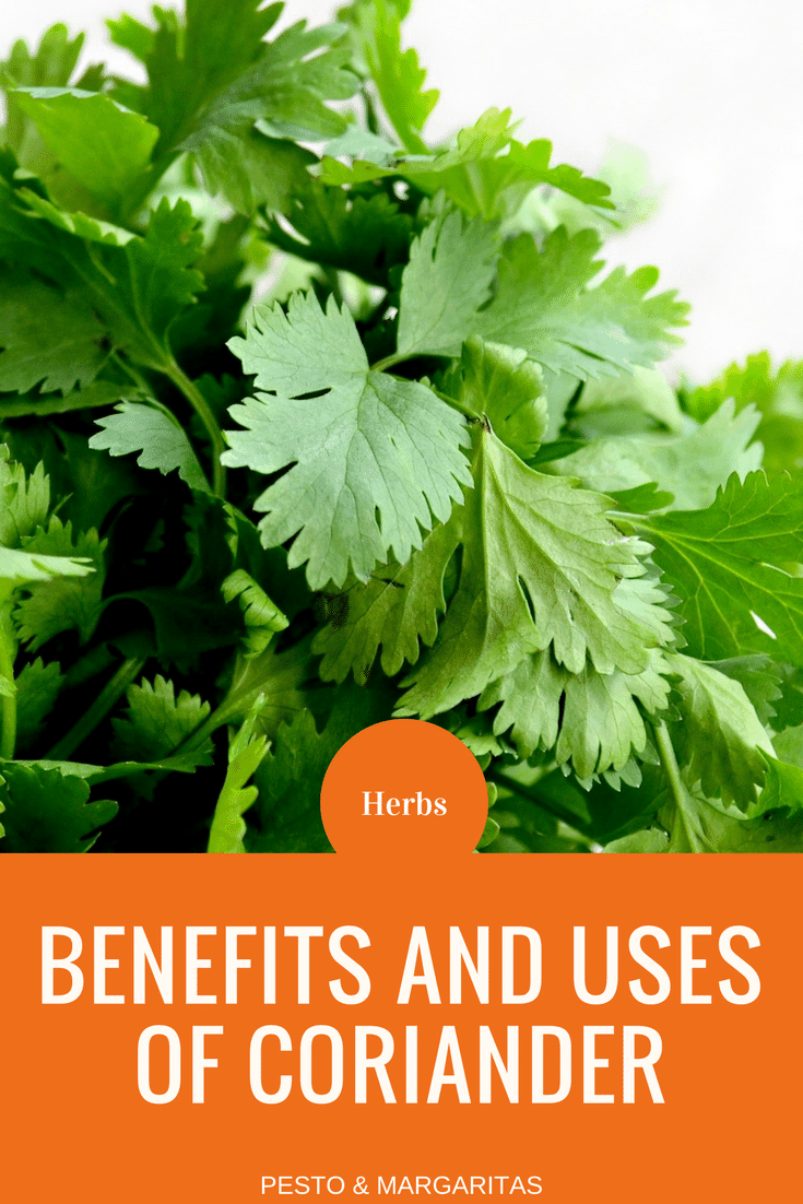 Coriander is a herb that is used in dishes ranging from curries to soup and is often known as cilantro in the US. But what are the benefits of the herb and what dishes can you easily make with it?