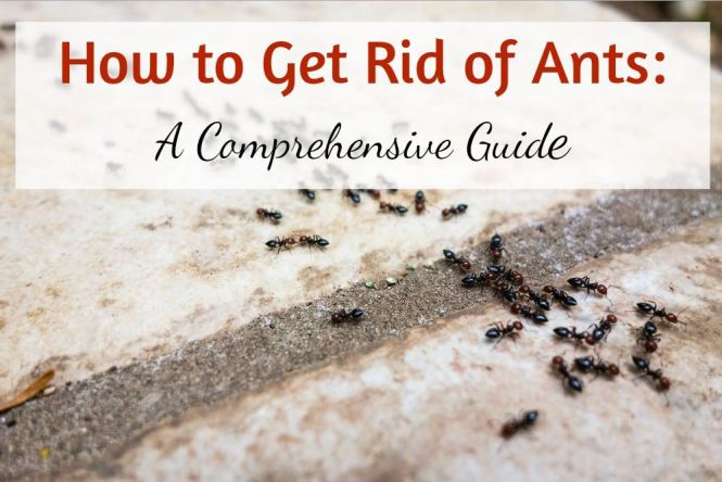 21 Natural Ways To Get Rid Of Ants