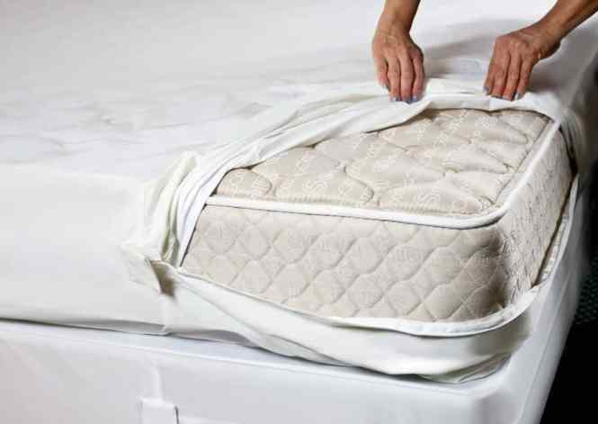 Best Bed Bug Mattress Cover