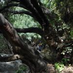 רבי שמעון בר יוחאי ורבי אלעזר מסתתרים במערה, על שום מה?
