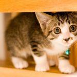 子猫が臭い!おしりや口、おならがにおう原因や対処法、対策方法は?