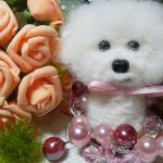 ビションフリーゼのカットスタイル集を画像で紹介!可愛いおすすめ種類は?