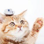 猫の夏毛はいつからいつまで?冬毛との違いや特徴、抜ける時の対処方法は?