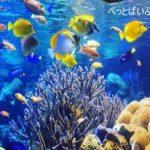 サンゴの水槽のレイアウト!おすすめのおしゃれな配置やインテリアは?