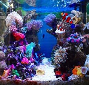 サンゴの水槽のレイアウト5