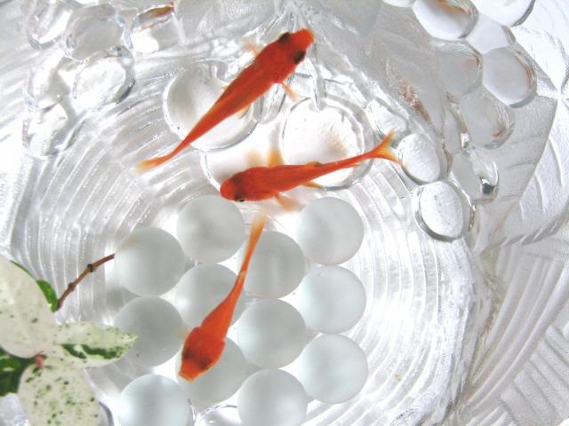 金魚 死因