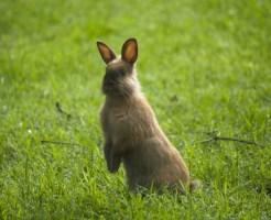 ミニウサギ 飼い方