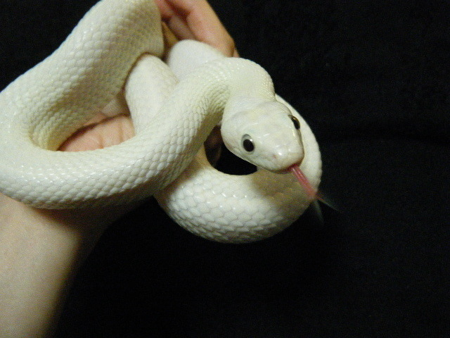 ヘビ 種類