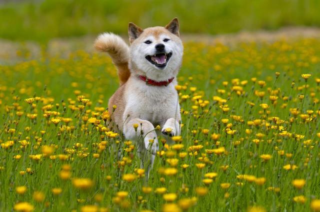 犬 スルメ 食べた 対処法