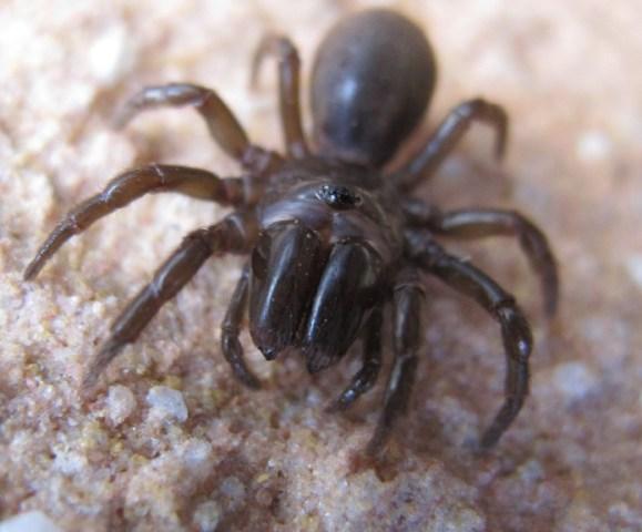 地蜘蛛 飼育