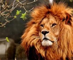 ライオン なつく 骨格 別名 夜行性