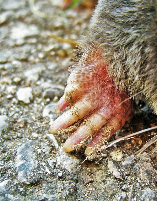 モグラ 天敵 巣 鳴き声 冬眠 ネズミとの違い