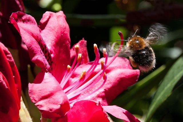 クマバチ クマンバチ 種類 寿命 毒針