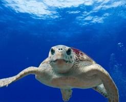 アオリイカ 寿命 最大サイズ 分布 生態