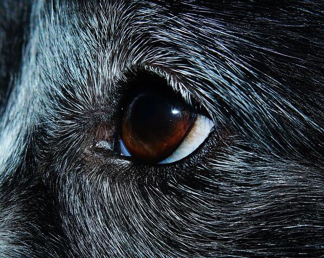 eye-948573_640