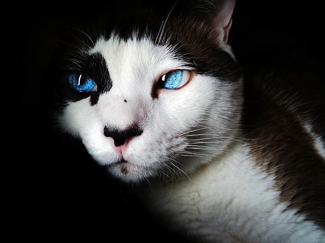 の 種類 一覧 猫