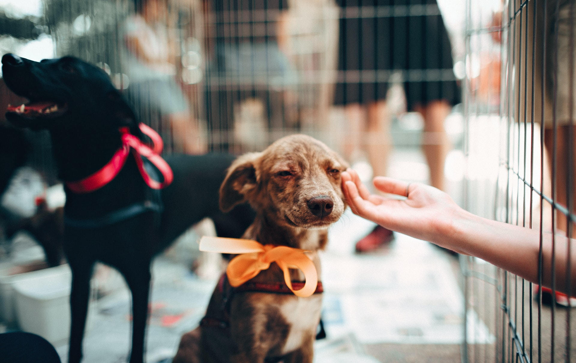 How to help save a shelter animal