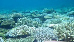 珊瑚礁 白化