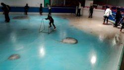 スペースワールド 氷の水族館