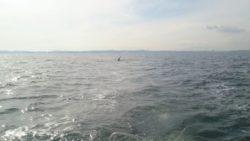横浜 八景島沖 クジラ
