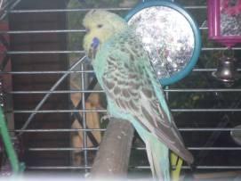 Avian1