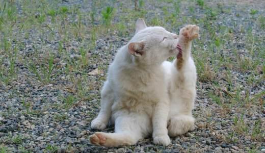 愛猫の毛玉対策はできていますか?正しい対策を知っておこう!
