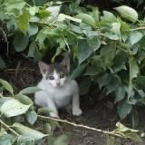 生まれたての子猫を保護したらスグにしてあげたい正しい対処法
