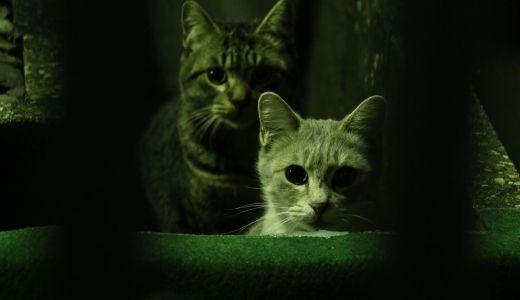 猫は夜行性なの?!猫の元気になる時間と睡眠時間