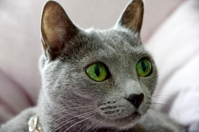 猫 耳 掃除