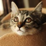 猫 腎不全