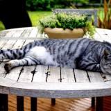 猫が膀胱炎に!考えられる原因と対処法
