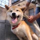 犬がブラッシングを嫌がる理由とは?飼い主なら知っておきたい正しいブラッシング方法
