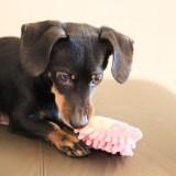 寂しくない!飼い犬のお留守番時に用意したいおもちゃとは?