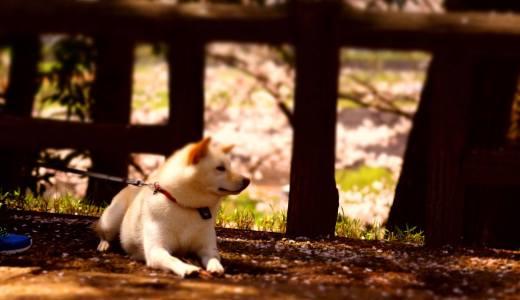 犬が首輪を嫌がる時の原因や首輪に慣れてもらう為のトレーニング方法