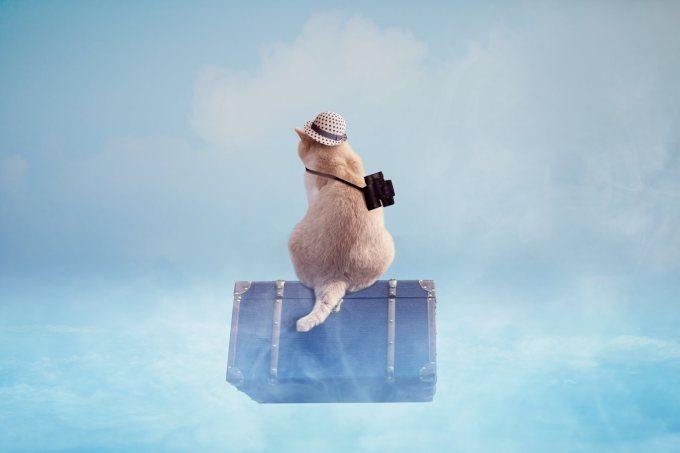 猫 旅行 連れていく
