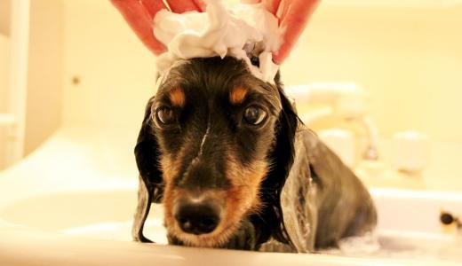 犬がシャンプーを嫌がる時に試したいシャンプーを好きになってくれる方法
